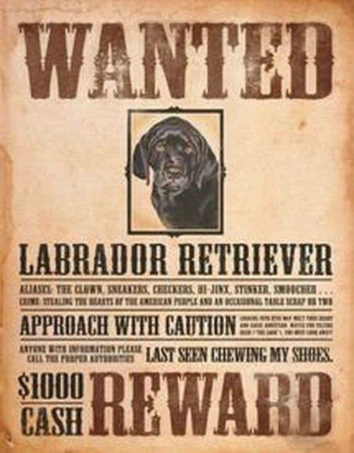 Tin Sign Black Lab - Wanted Poster - 034-1148